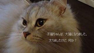 画像 028.jpg